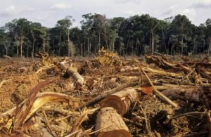 Informe de RainForest Action Network denuncia la financiación de la deforestación